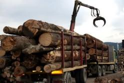 Exportul de material lemnos din România, suspendat până pe 31 august 2015