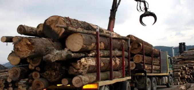 Jandarmii români au confiscat peste 850 de metri cubi de lemn tăiat ilegal
