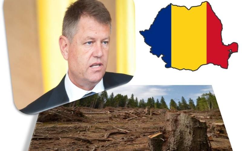 Românii ies în stradă din cauza refuzului lui Iohannis de a promulga Codul Silvic ce oprea defrișarea pădurilor