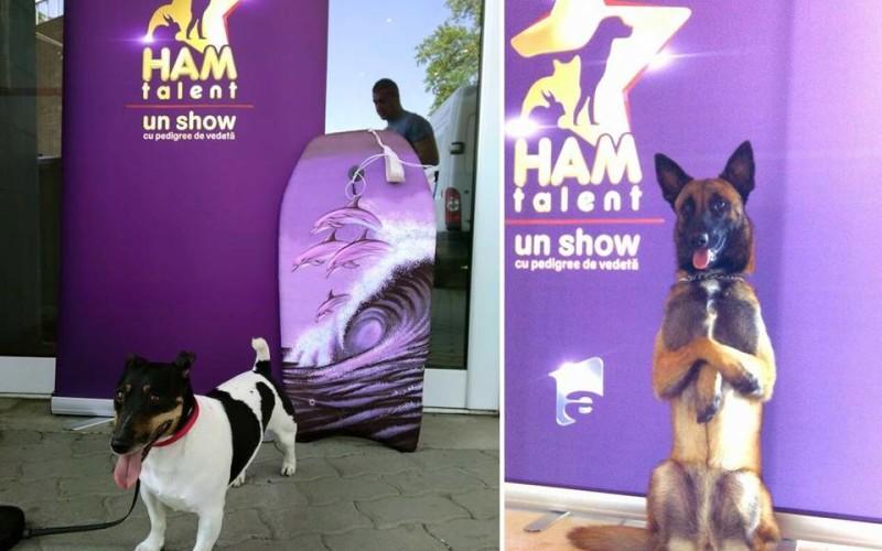 """Un câine din Timișoara face surf și vrea să devină vedetă """"Ham talent"""""""