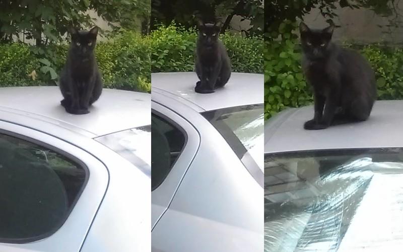 Pisica neagră, ședință foto în plină zi pe capota unei mașini – GALERIE FOTO