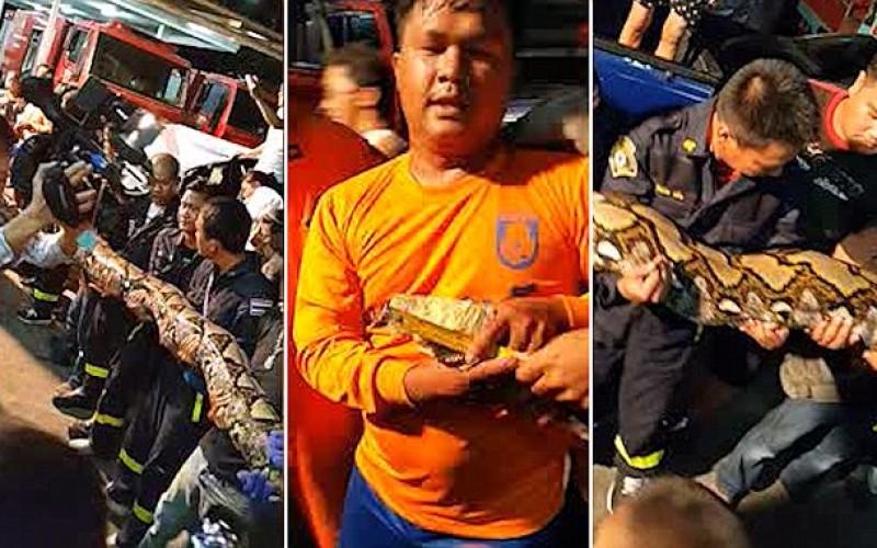 17 pompieri s-au luptat cu bestia lungă de opt metri din Bangkok – VIDEO