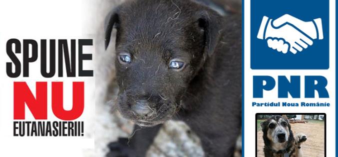Câinii fără stăpân au un aliat. Partidul Noua Românie se opune eutanasierii