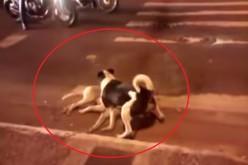 VIDEO EMOȚIONANT | Își riscă viața încercând să protejeze un câine lovit de mașină