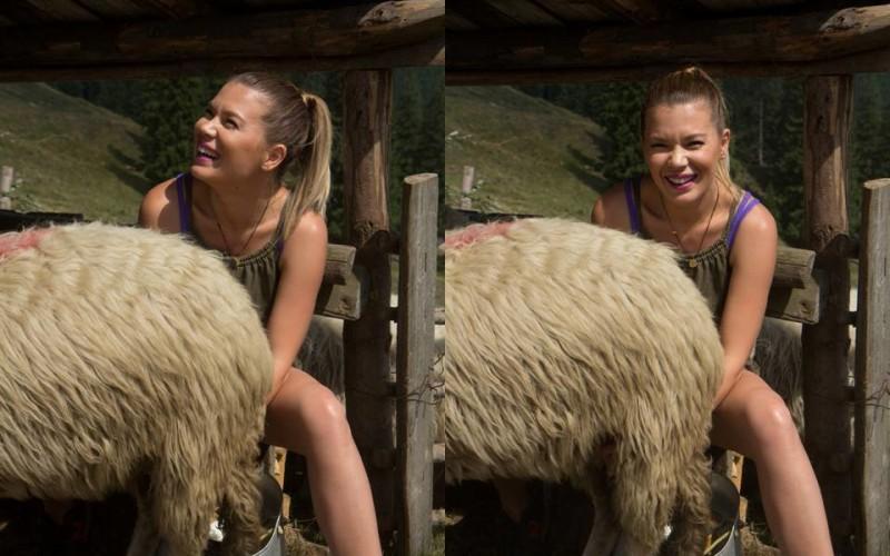 """Gina Pistol a ajuns la coada vacii. A fost nevoită să mulgă oi și vaci la """"Poftiți de vă iubiți!"""""""