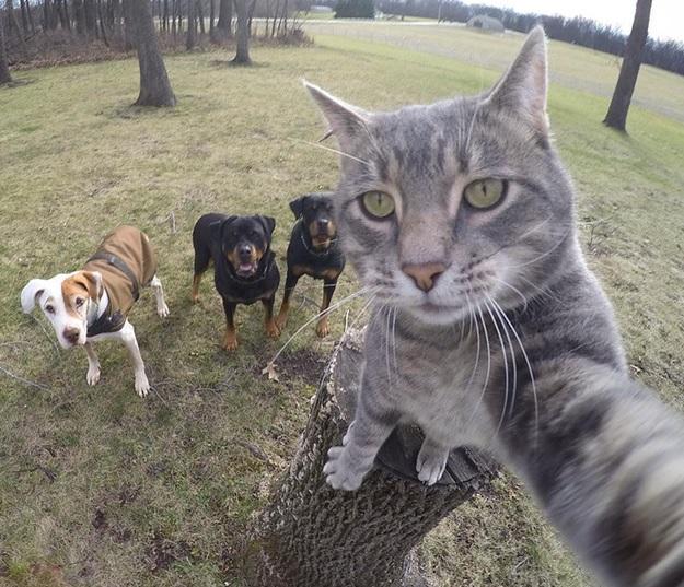 motan selfie caini