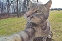 Un motan a ajuns viral pe net pentru că își face singur selfie – GALERIE FOTO