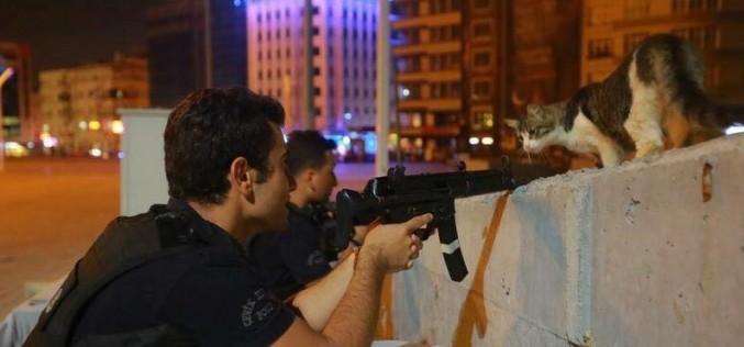 Fotografia ZILEI în Turcia   O pisică a oprit lovitura de stat a armatei!