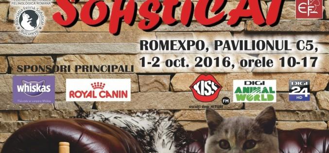 Peste 250 de pisici din toate colțurile lumii vor fi admirate la Expoziția SofistiCAT de la Romexpo