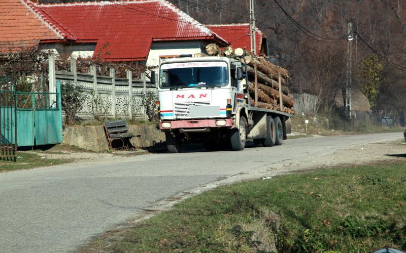 În Gorj se fură lemne ca-n codru. Greenpeace România sesizează procurorii DIICOT