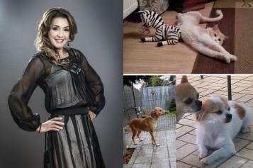 Nico, mare iubitoare de animale, are acasă patru căței și trei pisici