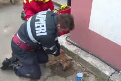 Pompier român, celebru în lume după ce a salvat un câine făcându-i respirație gură la gură – VIDEO