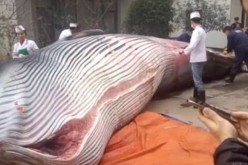 ȘOCANT | Au tăiat o balenă de opt tone, de față cu trecătorii – VIDEO