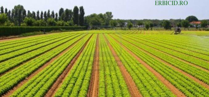 Cum se face corect erbicidarea livezii? Sfaturi utile oferite de experții erbicid.ro