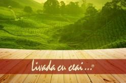 Importanța ceaiului verde pentru o stare de sănătate optimă