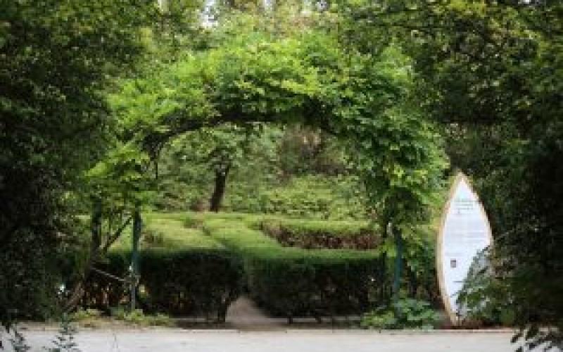 """Secom a plantat în Grădina Botanică din Bucureşti """"Grădina cu Remedii"""""""