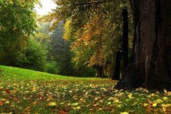 Habitatele Pădurii Topana au intrat în atenția Agenţiei pentru Arii Naturale Protejate