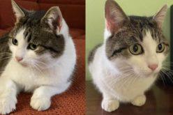 O pisică din Rusia a devenit cel mai scump animal din lume. Felina are puteri vindecătoare